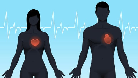 Vector Male and Female Anatomy - Hearts Shown
