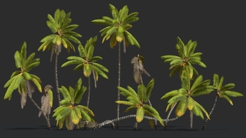 Coconut Palm Trees Asset 1