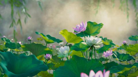 3D flower collection vol07 Lotus