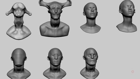 Base Head Models