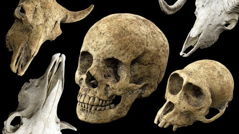Skull Props Pack