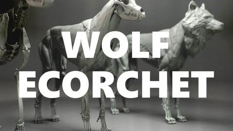 Wolf Ecorchet