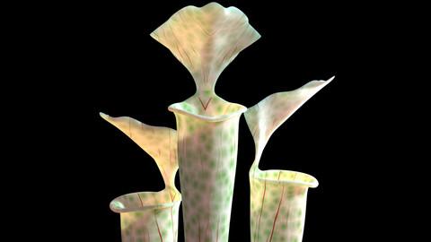 3D Pitcher plant