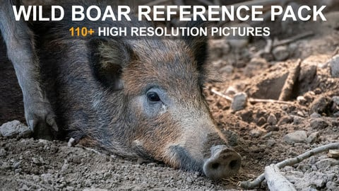 Wild Boar / Pig - Reference Pack