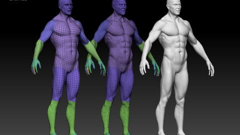 3D male base mesh (rigged)