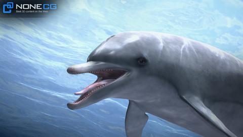 Animated Bottlenose Dolphin