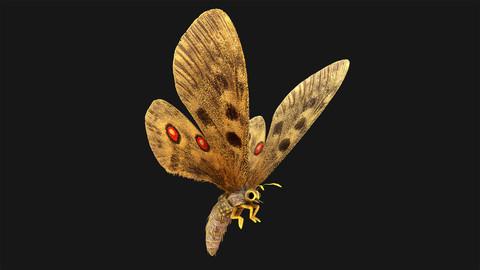 Butterfly - 01