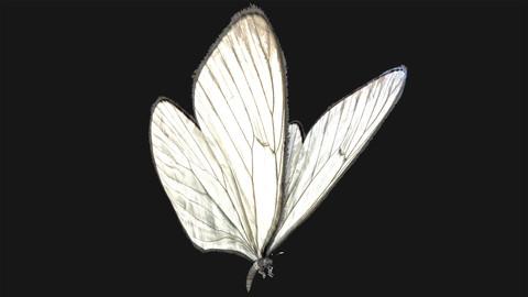Butterfly - 04