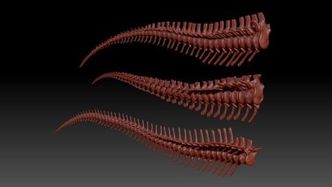 Spinosaurus - Tyrannosaurus - Giganotosaurus Tail Skeletons Set