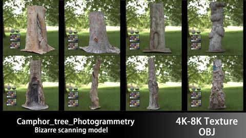 Camphor_tree_Photogrammetry 40 % Discount coupon:TREE1010