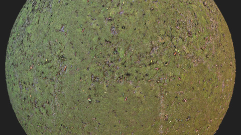 Mossy Ground pbr Material
