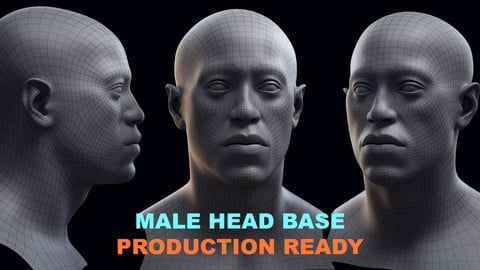 Male Head Base Model – Ready for Production