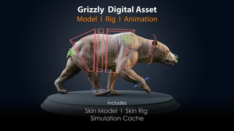 Grizzly Asset I Skin ; Rig & Simulation Cache