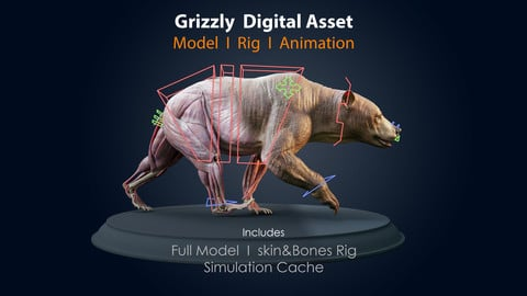 Grizzly Asset I Anatomy Model - Rig - Simulation Cache