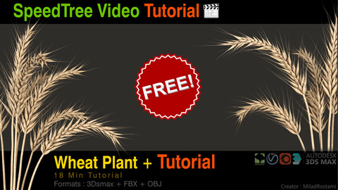 Wheat plant + Modeling Tutorial