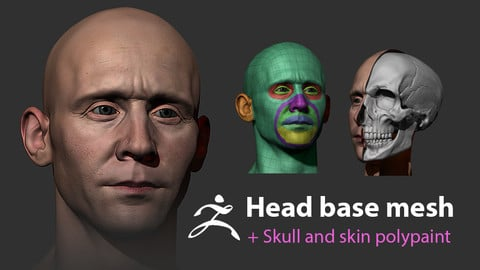 Male head base mesh