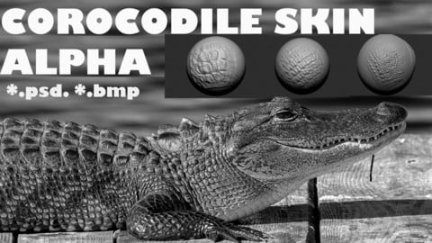 Alpha brush Corocodile