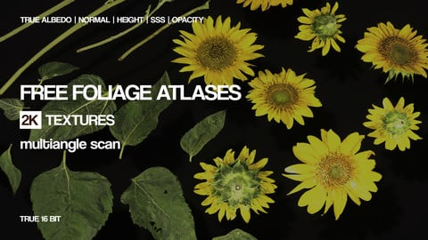 Free atlas textures | Photogrammetry | 32 .tif`s
