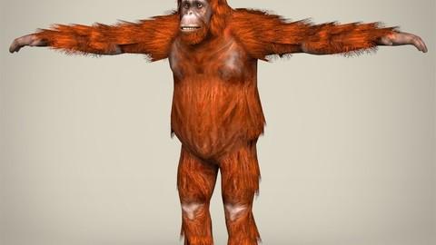Low Poly Orangutan 3D Model
