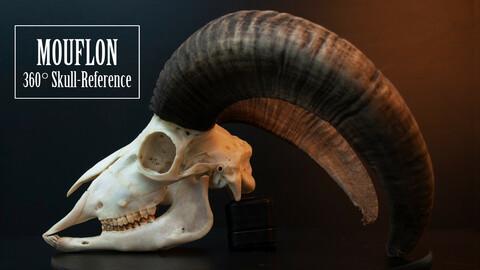 Mouflon Skull - 360 Refernce Pack