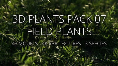 3D Plants Pack 07 - Field Plants
