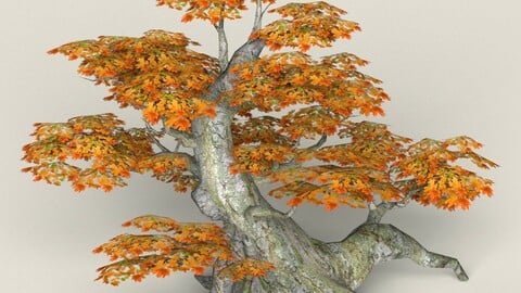 Low Poly Maple Tree 01