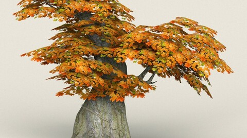 Low Poly Maple Tree 03