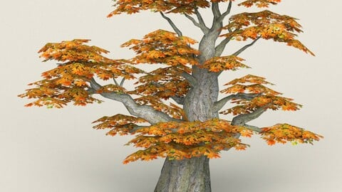 Low Poly Maple Tree 09