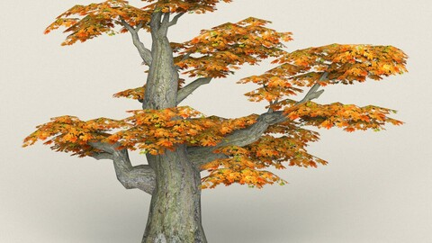 Low Poly Maple Tree 11