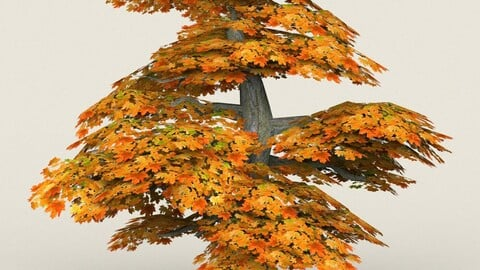 Low Poly Maple Tree 12