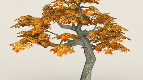 Low Poly Maple Tree 13