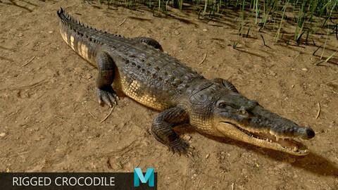 Realistic Crocodile Rig