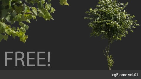 cgBiome vol.01 - Summer Trees samples