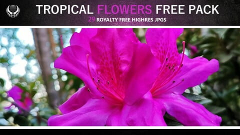 TROPICAL FLOWERS FREE PACK