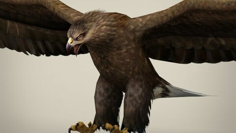 Game Ready Low Poly Eagle