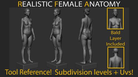 Realistic Female Anatomy