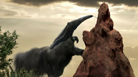 Termite's mound