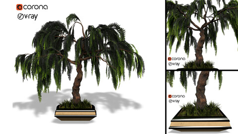 Decorative ornamental tree plant 04