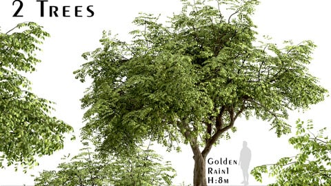Set of Golden Rain Trees (Koelreuteria Paniculata) (2 Trees)