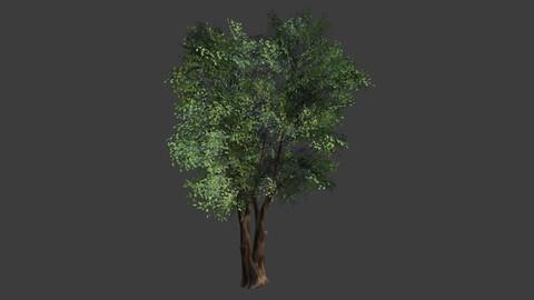 Tree (Modular Planes)