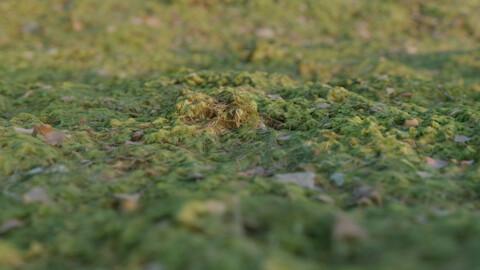 Flat mossy ground
