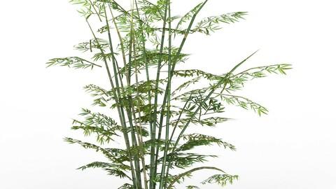 Bamboo Tree 01
