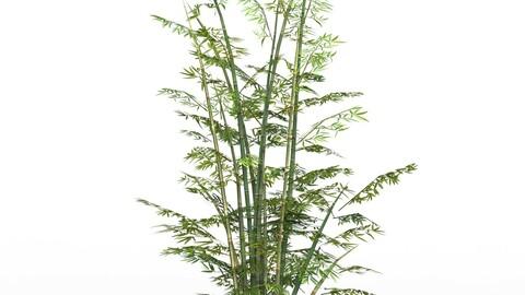 Bamboo Tree 03