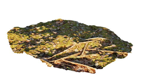 Flat ground with moss sticks and leaves