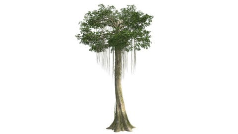 Kopak Tree