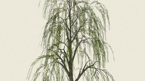 Willow Tree 08
