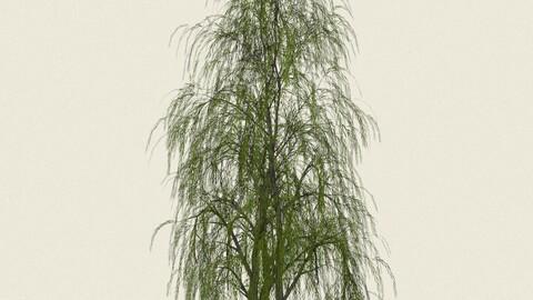 Willow Tree 09