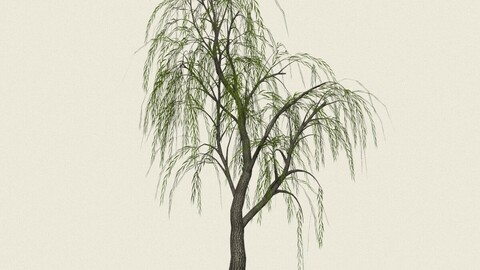 Willow Tree 12