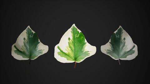 Leaf Pack Scanned