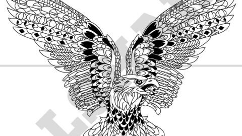 Eagle Vector Draw, Illustrator